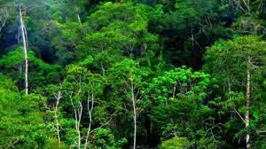 Tipe Hutan Berdasarkan Iklim di Indonesia