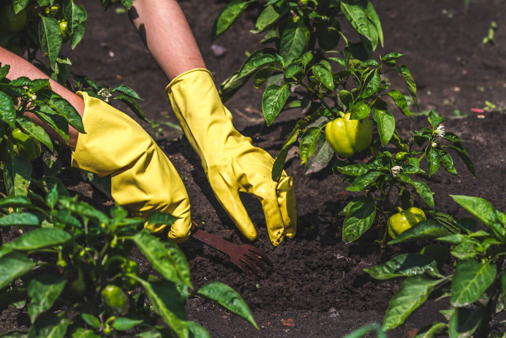 Why Gardening Gloves is Important for Gardeners?