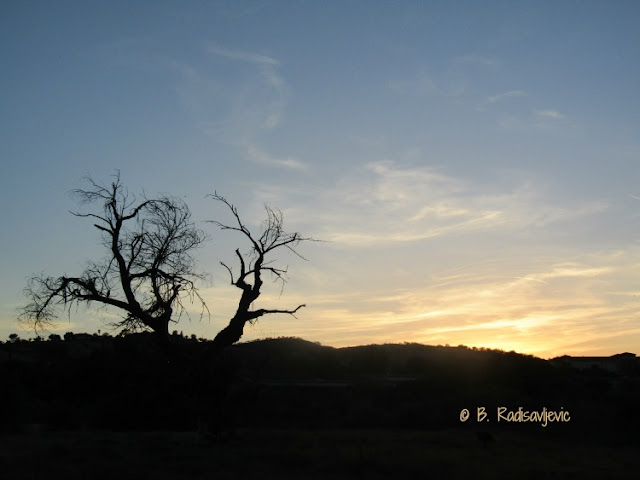 """Larry"" Moore Park in Paso Robles: A Photographic Review - Bare Cottonwood Tree in the Sunset"