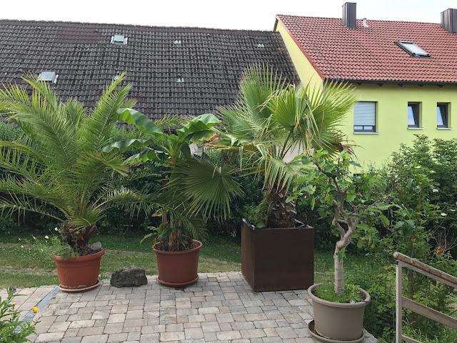 das Kübelpflanzenensemble auf der Terrasse am Haus (c) by Jochim Wenk