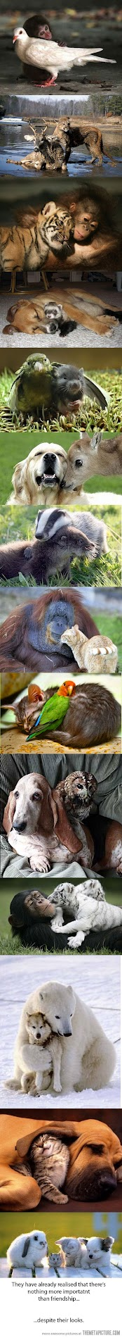 we can all be friends