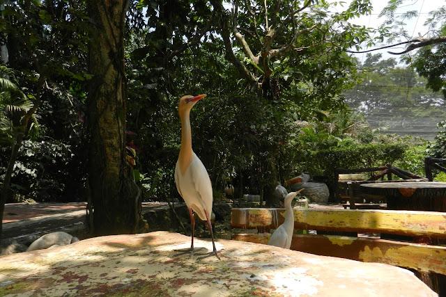 Bird Park w Kuala Lumpur