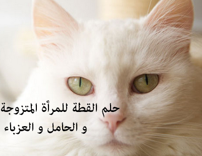 تفسير حلم القطة للمرأة المتزوجة و الحامل و العزباء