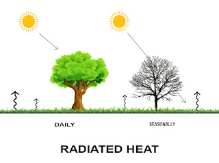 Role of Vegetation in Wind Control
