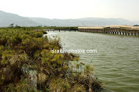 Hula Valley, Emek HaHula, Upper Galilee, Nature, Travel, Pictures, Lake Hula