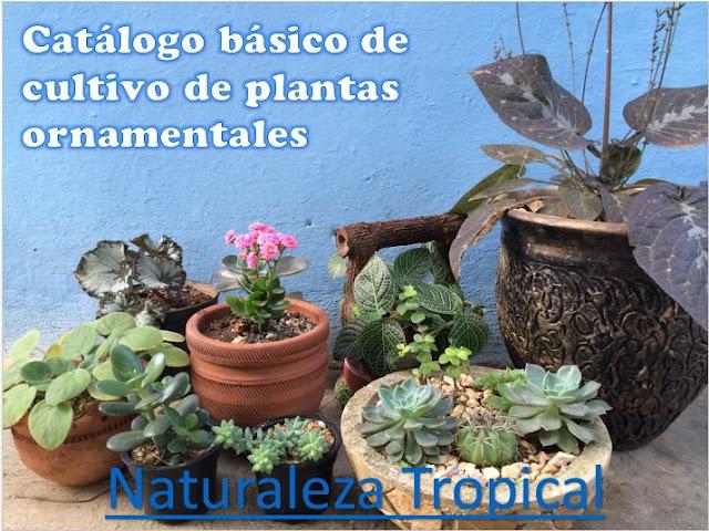 Presentación de nuestro Manual básico para el cultivo de plantas ornamentales