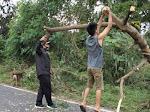 Akibat Angin Kencang Material Pohon Tumbang, Kapolres Bitung Bersama Personil Lakukan Ini