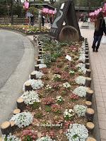 Flower border between two street, Kochi, Shikoku