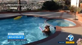 Bear Enjoys Playing in a Swimming Pool