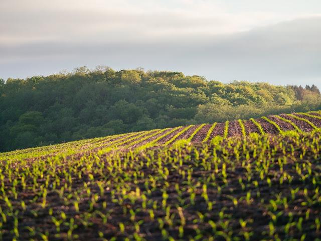 Best Side of Biodynamic agriculture