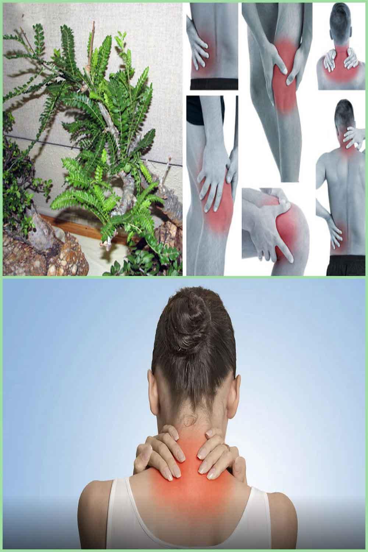 Méthodes naturelles pour soulager les douleurs nerveuses