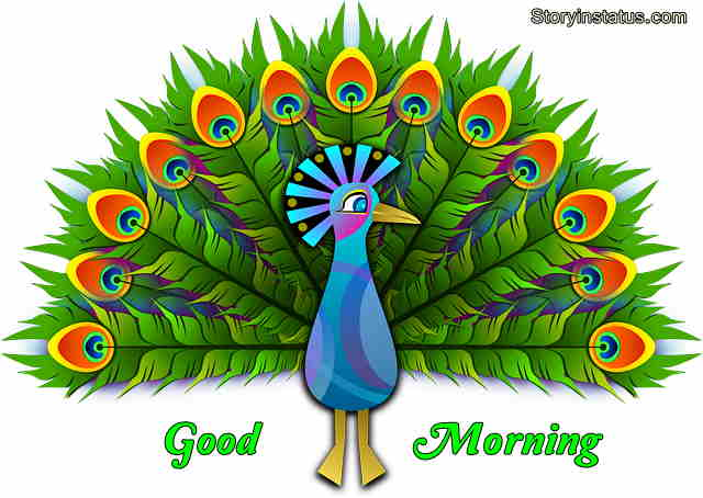 Good morning peacock images hd