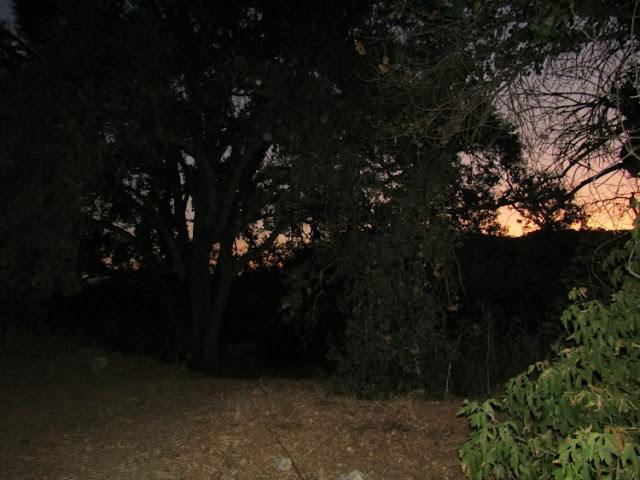 """Larry"" Moore Park in Paso Robles: A Photographic Review -  Sunset Behind the Trees"