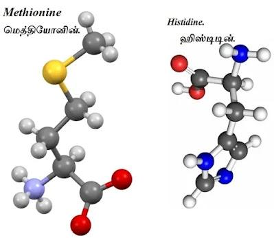 methionine_histidine