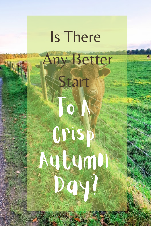 Is There Any Better Start To A Crisp Autumn Day, Than A Walk In The Countryside?