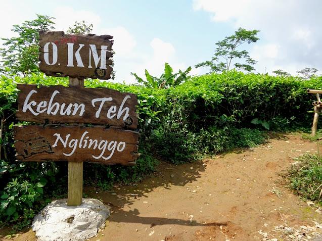 Harga Tiket Masuk Kebun Teh Nglinggo Samigaluh, Kulon Progo, Yogyakarta