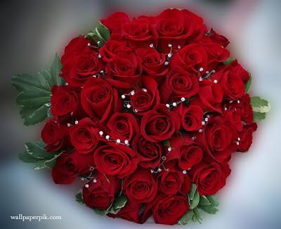 download new   rose wallpaper image