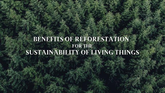 Benefits of Reforestation
