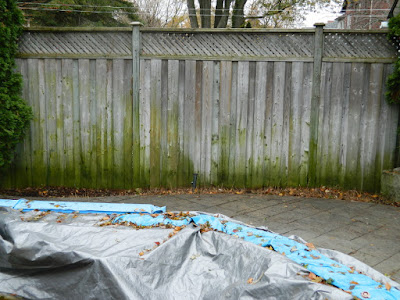 Toronto Gardening Services Bedford Park Backyard Fall Cleanup after by Paul Jung
