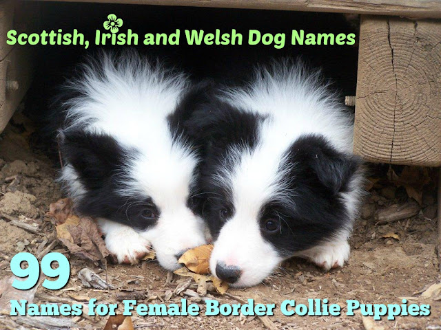 Dog names from Scottish Celtic and Irish lore