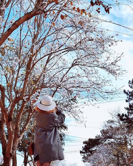 Tháng 1 hoa ban nở trắng trời Đà Lạt đẹp tựa như trong tranh 9