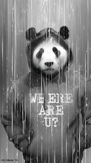 Men Panda Mobile HD Wallpaper
