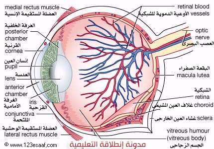 تشريح العين - اطلس طبي كامل صور + فلاش+ فيديو