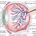 تشريح العين (تركيبة العين) - اطلس طبي كامل صور + فلاش+ فيديو