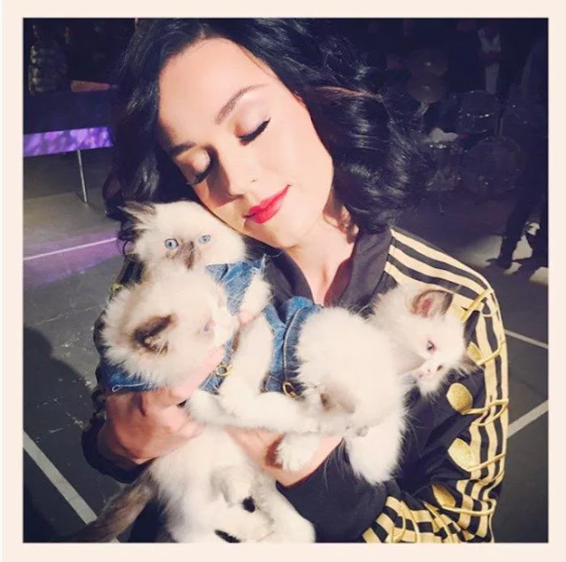 Moments of Hollywood Artists with Favorite Cats