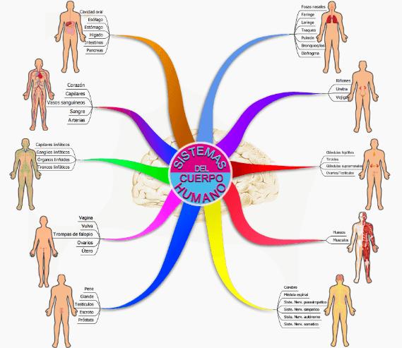 ubicación de las imágenes en el mapa mental del cuerpo humano