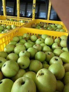 penyimpanan buah apel malang