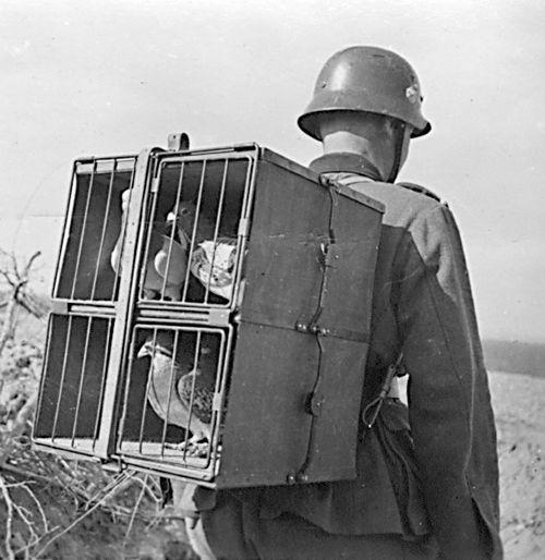First World War / WWI, female worker in an ammunition ... |Wwi Messenger