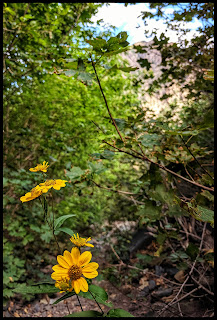 Stairs Gulch might not boast of a multitude of wild flowers, but the ones it does have are really something!