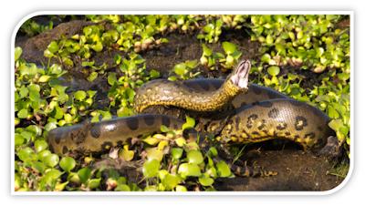 ular dengan naluri pembunuh