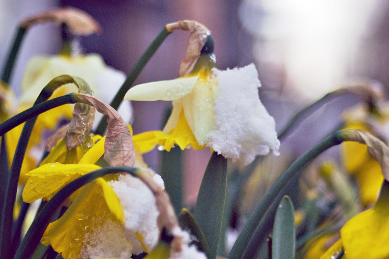 Wintereinbruch am 06.04.21 in Reutlingen