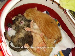 trucos-criar-gatitos-sin-madre