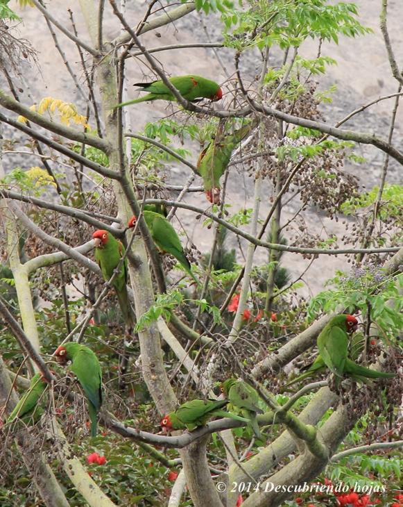 Famoso vivero hojas ingl s inspiraci n hojas de trabajo for Viveros en lima