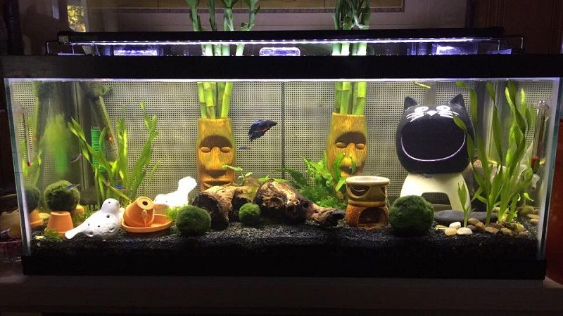 How do you make a flower vase for a betta fish Image community tank