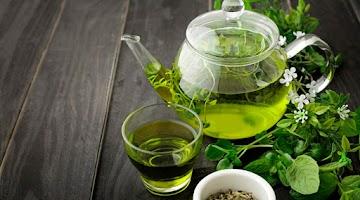 Beber chá verde pode ajudá-lo a viver mais tempo?