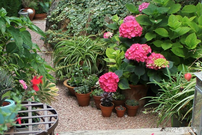 Hortensias al calor del verano
