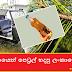 පයිනස් ශාකයෙන් පෙට්රල් හදපු ලංකාවේ කොල්ලා (The Sri Lankan Boy Who Made Petrol From Pine Tree)