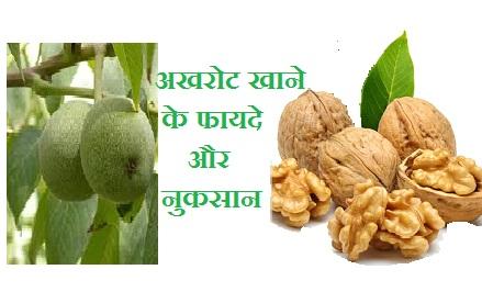 पुरूषों के लिए अखरोट लाभ, akhrot khane ke fayde, walnut side effects