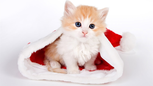 Cute Kitten Christmas Wallpapers