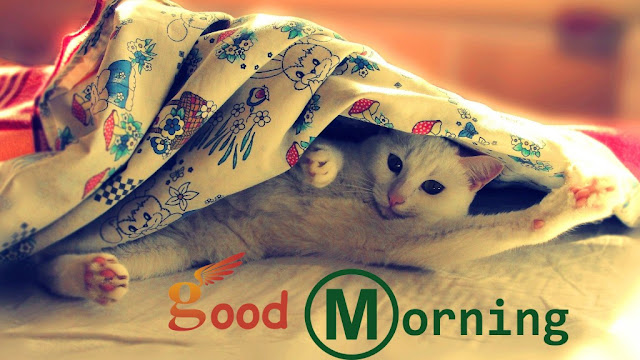 cute kitty good morning wallpapers
