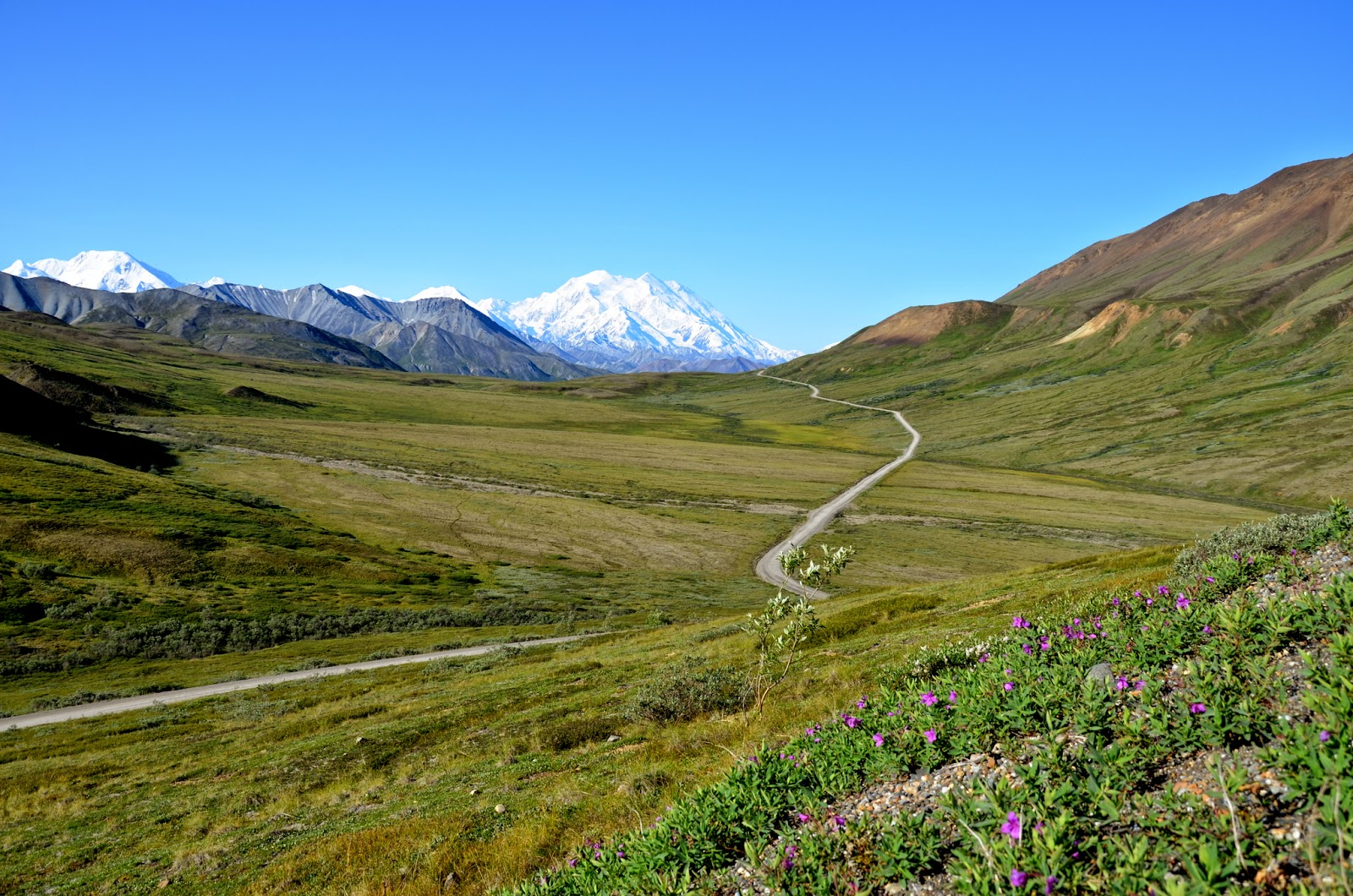 Mount Denali at its best, wonderful landscape