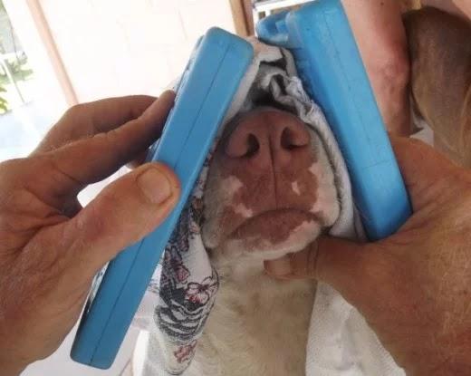Penyebab hidung anjing pendarahan perlu dicari sebab utamanya