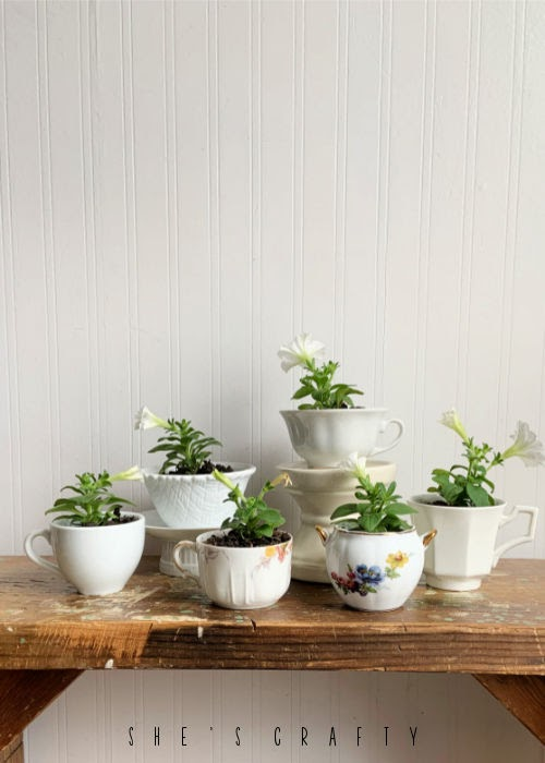 Flowers in tea cups for Mother's Day gifts.