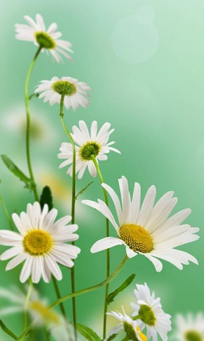 Spring Flowers Live Wallpaper For Android App Free Download