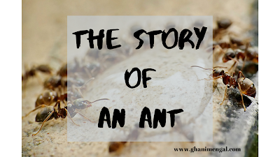 the story of an ant