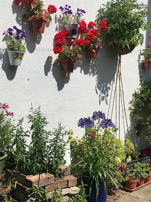 A white wall with pots of geraniums on it.